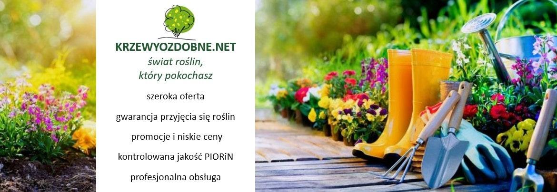 Krzewy Ozdobne Net Sklep Ogrodniczy Online Zamów Rośliny