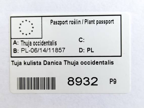 Tuja kulista Danica Thuja occidentalis